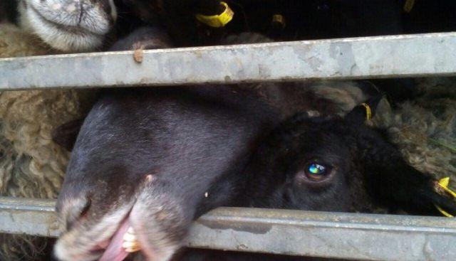 В Чорноморську жорстоке поводження із тваринами фото 1