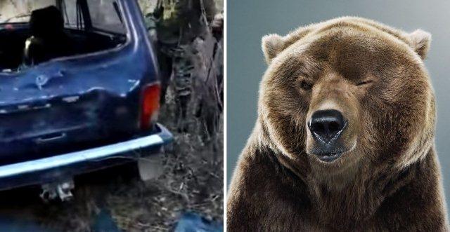 У Росії ведмідь потрощив автомобіль мисливців