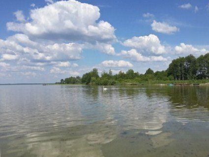 У Шацькі озера запустять цінну рибу - білого амура