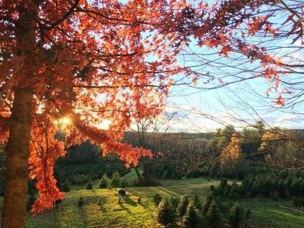 Сьогодні, 27 жовтня, Параски Грязнулі: не можна надто веселитися і чому треба берегти очі