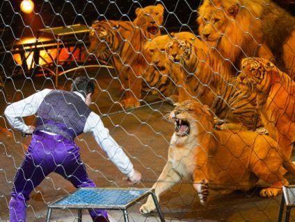В Росії у цирку левиця подерла дівчинку (відео 18+)