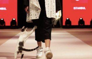 В Туреччині бездомна кішка «оживила» нудну дефіляду манекенниць і насмішила Інтернет (відео)