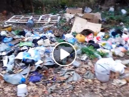 «Це, мабуть, Путін»: волинський грибник показав відеокадри із загидженого лісу