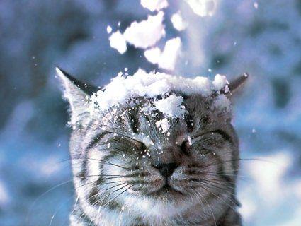 Українців завтра лякають штормовим попередженням, снігом та морозом до -10