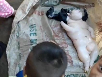 «Диявольське поріддя»: мутант, народжений на Філіппінах, перелякав усю планету (фото, відео)