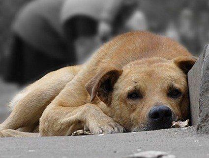 У Луцьку зросла кількість безпритульних тварин