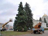 У Луцьку прикрашають ялинки до новорічних свят (фото)