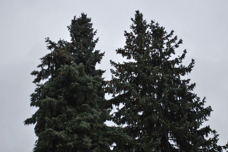 Луцьк новорічна ялинка Театральна площа фото 3