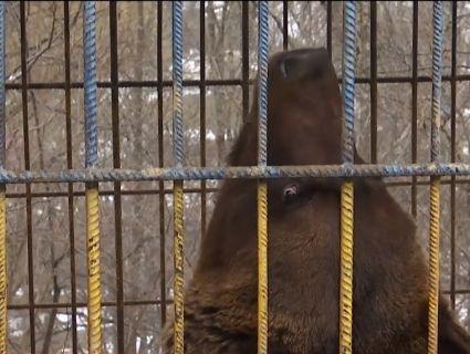 Розплата за фото: у Карпатах ведмідь мало не відірвав дівчині руку