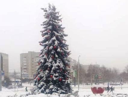 В Луцьку комунальники під снігопадом наряджають ялини біля РАЦСу (фото)