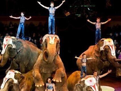 В Україні підтримали заборону використовувати тварин в цирку