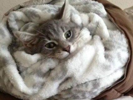 До кінця січня українці замерзатимуть в мороз  - 30 градусів