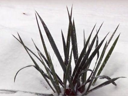 «Як попаде в око, ніс чи у вухо, це може бути смерть на місці»: біля дитсадків Луцька знайшли небезпечну рослину-екзота (відео)