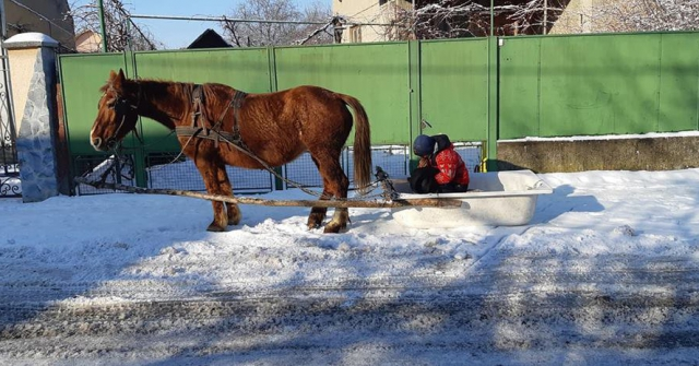 кінь ванна