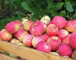 Небезпечні вітаміни: львів'янка потрапила в реанімацію через яблуко