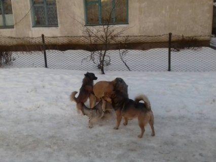 Хто в місті господар: ківерчан атакують бродячі собаки