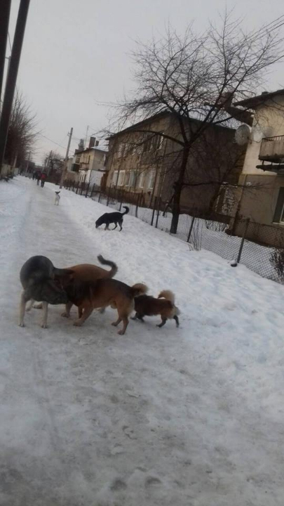 Напад бродячих собак