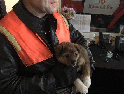 У Кривому Розі рятувальники «всиновили» цуценя, яке городяни сплутали з дитиною (фото)