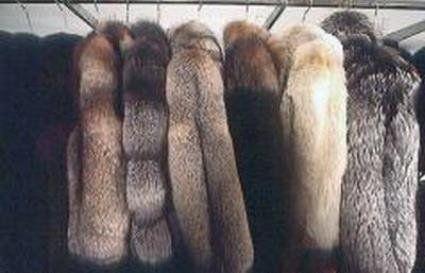 На Волині у торговому центрі вкрали 36 норкових шуб