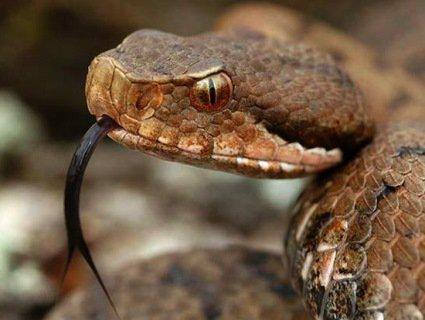 Конкурс: на День Валентина назвіть ім'ям екс-кохання отруйну змію
