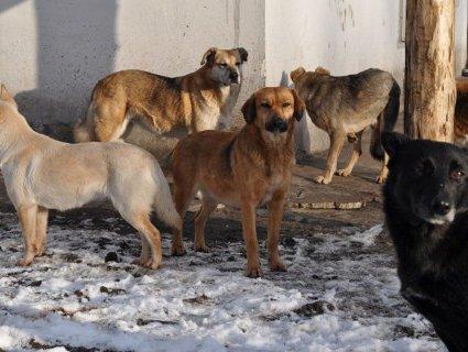У Луцьк бродячих собак звозять з усієї України (відео)