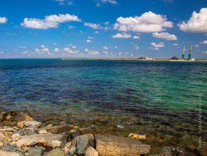 Узбережжя все у трупах: Крим спіткало нове екологічне лихо (відео)