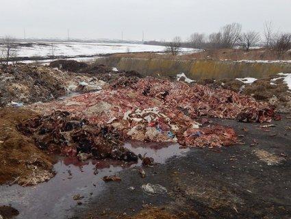 Постійний сморід: під Тернополем знайшли звалище тваринних решток