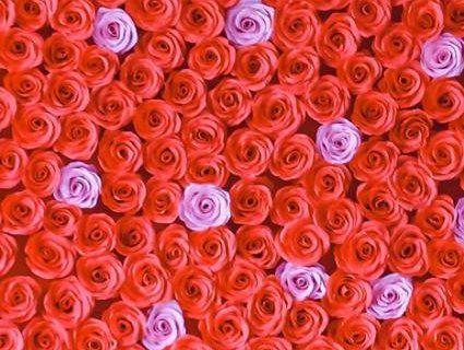Серце із шести сотень троянд виготовили у Луцькому зоопарку (фото)