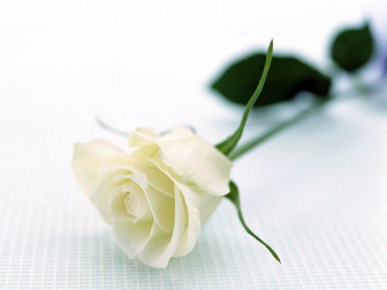 Юний романтик витратив усі гроші на квіти для дівчат