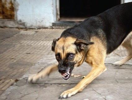 На Тернопіллі хлопчика покусав скажений собака