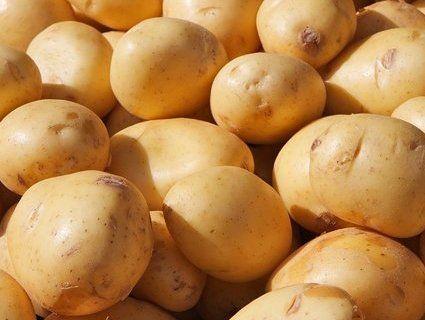 У минулому році в Україні зібрали рекордний врожай картоплі