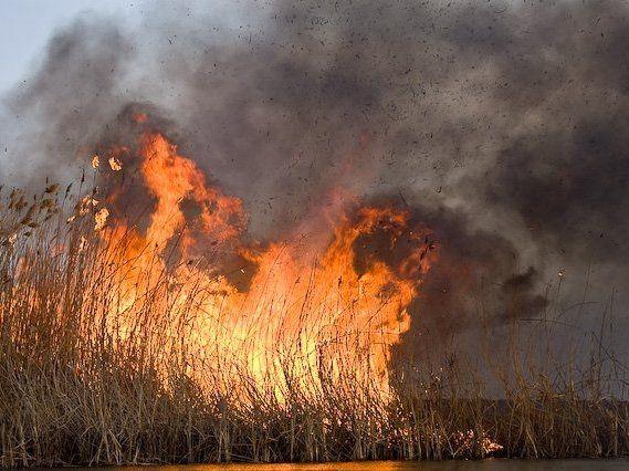 На Львівщині палає сухостій: моторошне відео масштабної пожежі
