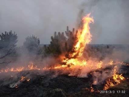 «Хто палить траву – то хай їхні хати горять», – волинський сільський голова (фото)