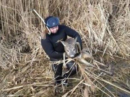 На Рівненщині ДСНСівці вирятували з тонкої криги косулю (фото)
