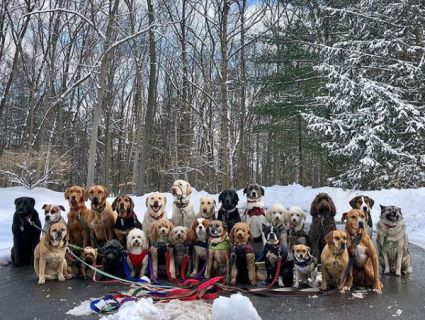 Собачий «нянь» постить яскраві фото з прогулянок одразу із 15 підопічними