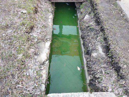 На українському курорті вода у ливнівках стала токсично-зеленою (фото)