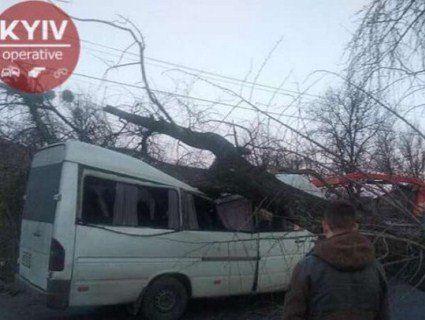 Під Києвом велетенське дерево розчавило маршрутку (фото)