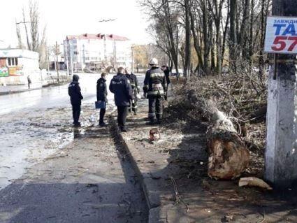 У Вінниці дерево «вбило» 12-річну дівчинку
