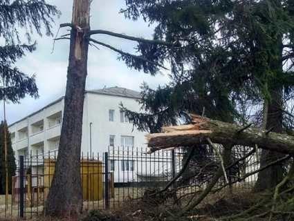 Негода у Луцьку: пом'яті автомобілі, зірвані дахи, повалені дерева (фото)
