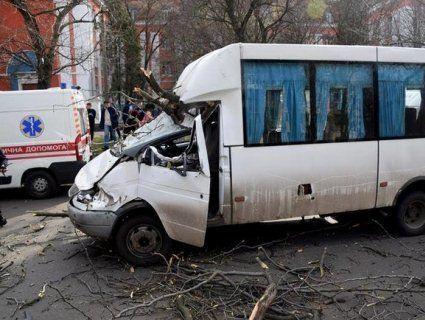 У Миколаєві дерево привалило маршрутку. Серед постраждалих – діти