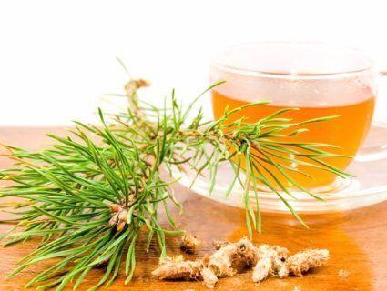 13 березня: чому сьогодні варто пити чай із соснових бруньок