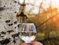 Кому корисно пити березовий сік та які хвороби лікує цей чудо-напій