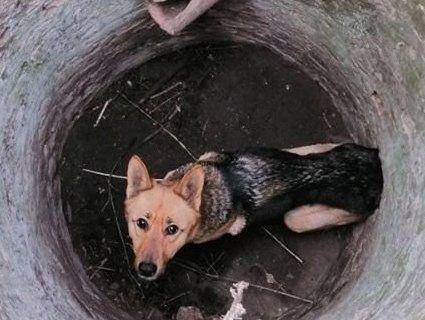 Під Луцьком собаку діставали з колодязя (фото)