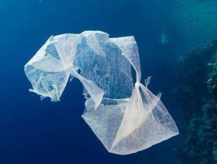 У шлунку померлого кита виявили 40 кілограмів пластику (фото)