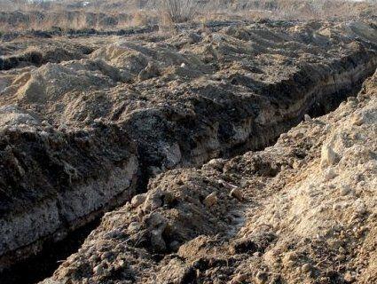 Підклали свиню: на Волині поблизу райцентру виявили туші 30 свиней