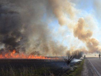 Масштабна пожежа в Рівному: врятувалися бобри (фото, відео)