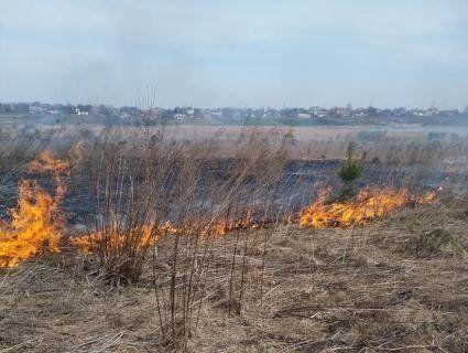 Паліїв не спинити: під Луцьком палає поле, де гніздяться куріпки (фото)