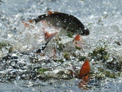 Не турбувати: на водоймах розпочинається нерестовий період