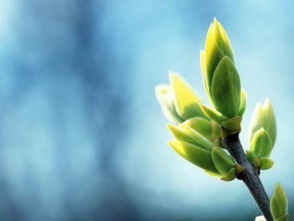 26 березня: чому сьогодні не можна рубати дерева