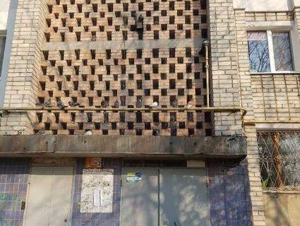 Голубів живцем замурували в стіну багатоповерхівки (фото, відео)